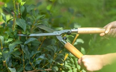 8 Spring Outdoor Home Maintenance Projects