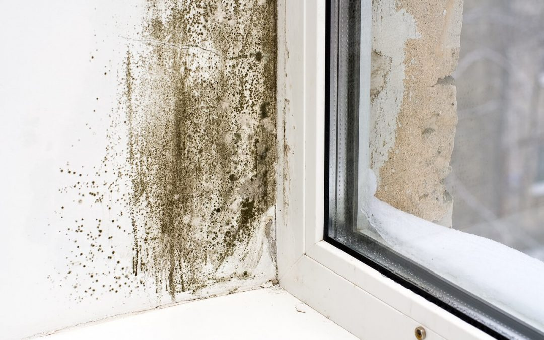 5 Common Causes of Mold in the Home
